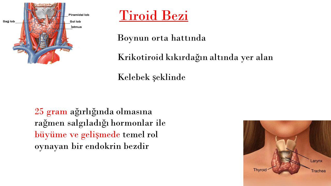 Tiroid Bezi Boynun orta hattında