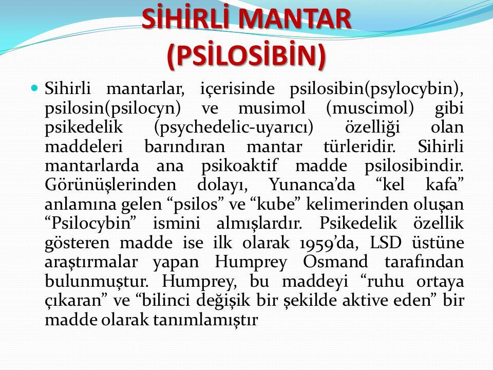 SİHİRLİ MANTAR (PSİLOSİBİN)