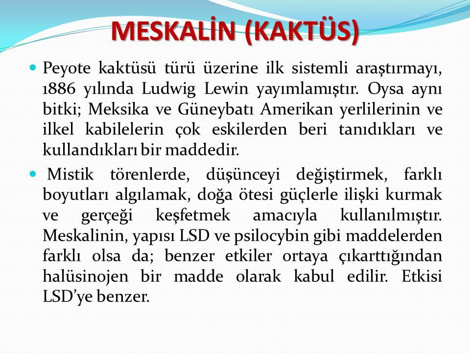 MESKALİN (KAKTÜS)