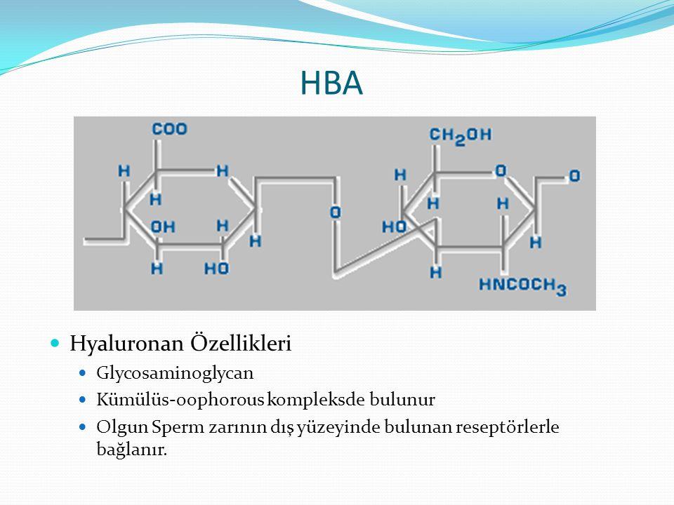 HBA Hyaluronan Özellikleri Glycosaminoglycan