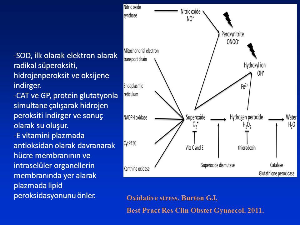 -SOD, ilk olarak elektron alarak radikal süperoksiti, hidrojenperoksit ve oksijene indirger.