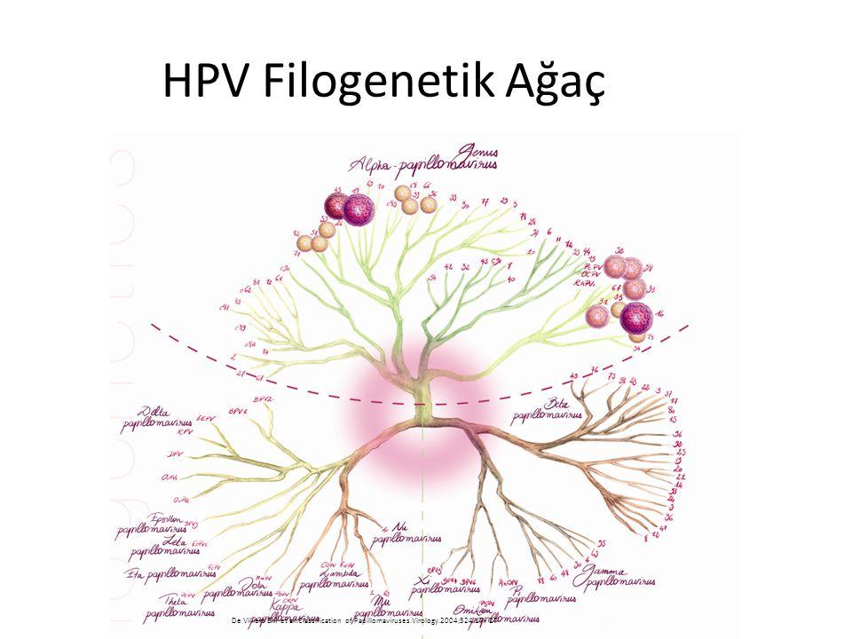 HPV Filogenetik Ağaç Burada HPV filogenetik ağacı görünüyor. Onkojonik virüslerin birbirine yakın olduğu gözlenmektedir.