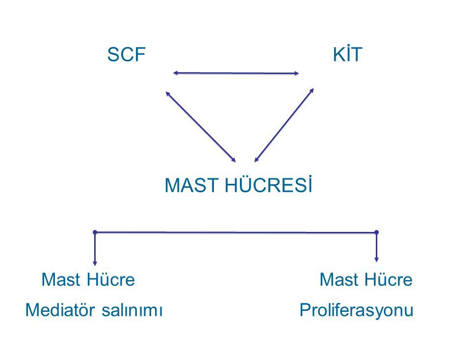 SCF KİT MAST HÜCRESİ Mast Hücre Mast Hücre