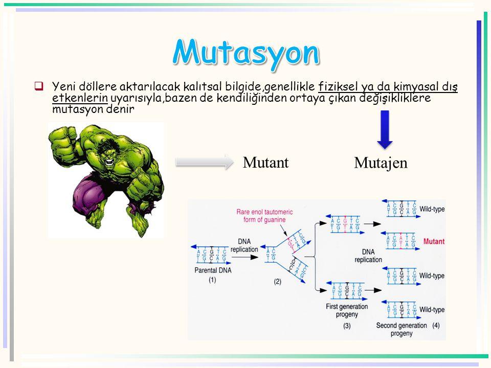 Mutasyon Mutant Mutajen