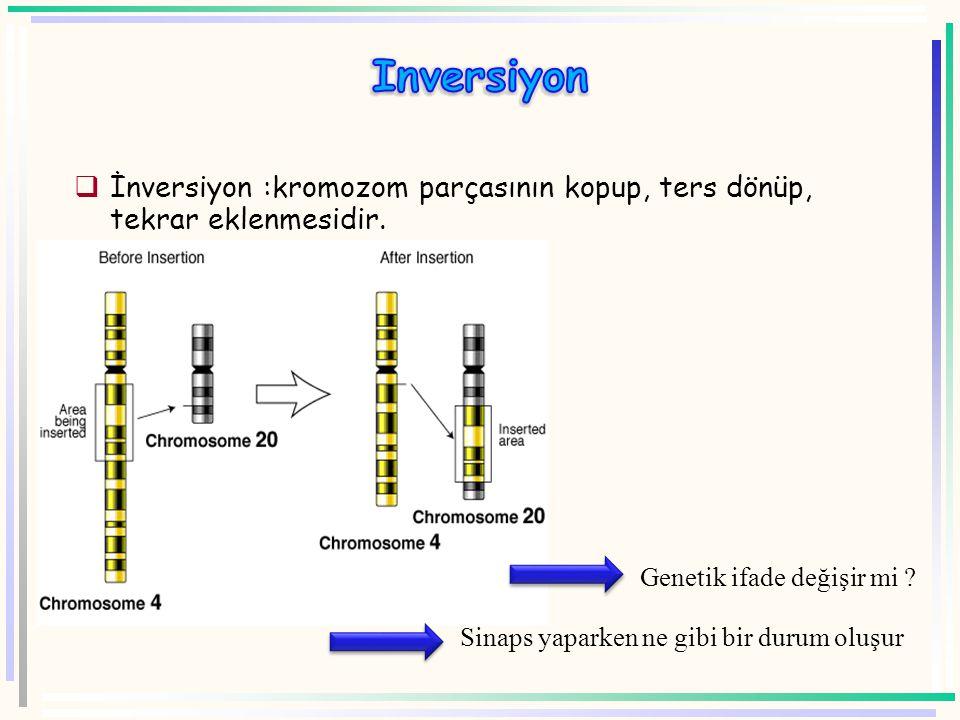 Inversiyon İnversiyon :kromozom parçasının kopup, ters dönüp, tekrar eklenmesidir. Genetik ifade değişir mi