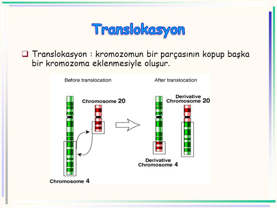 Translokasyon Translokasyon : kromozomun bir parçasının kopup başka bir kromozoma eklenmesiyle oluşur.
