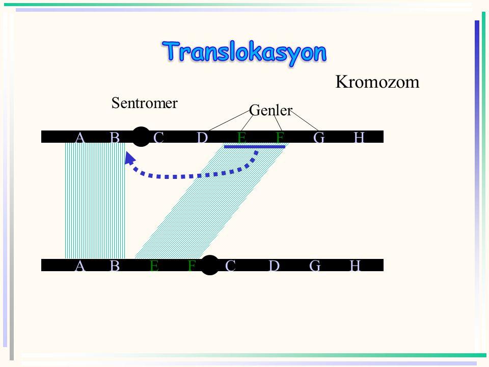 Translokasyon Kromozom Sentromer Genler A B C D E F G H