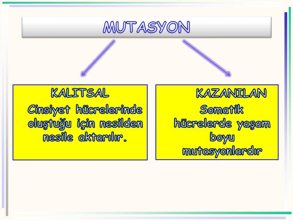MUTASYON KALITSAL. Cinsiyet hücrelerinde oluştuğu için nesilden nesile aktarılır.