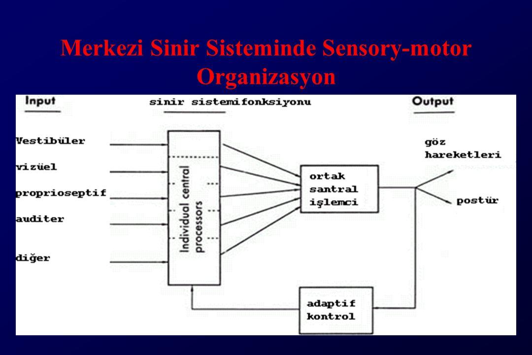 Merkezi Sinir Sisteminde Sensory-motor Organizasyon