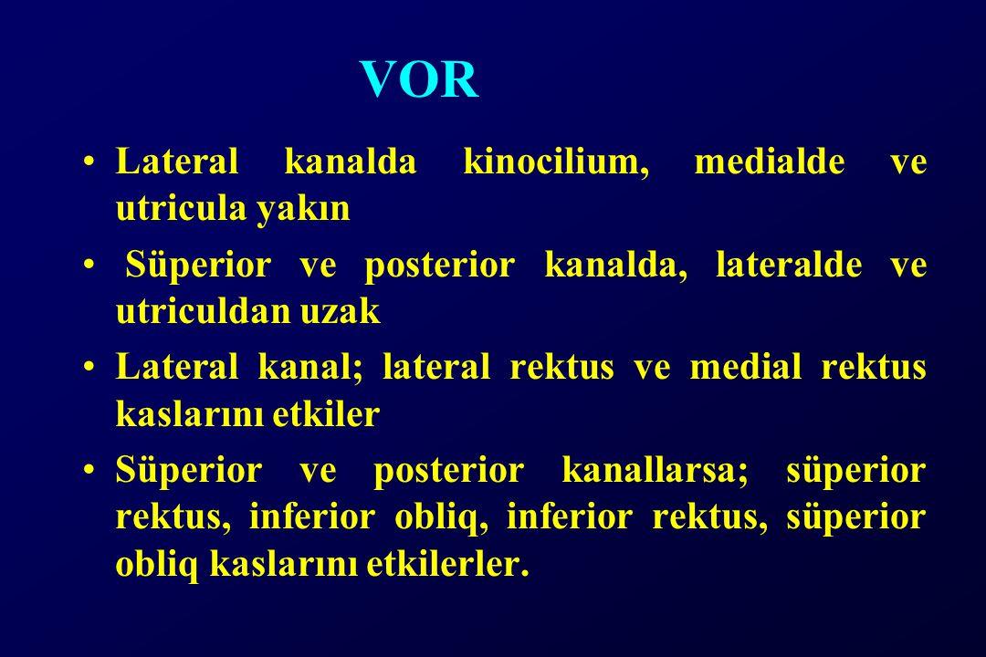 VOR Lateral kanalda kinocilium, medialde ve utricula yakın