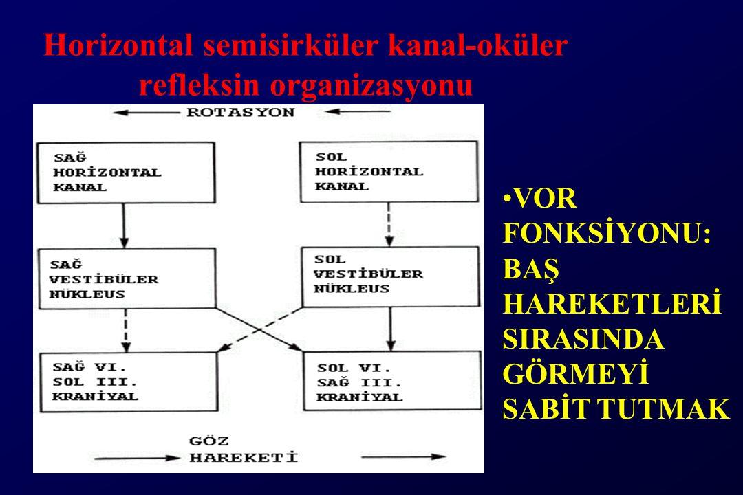 Horizontal semisirküler kanal-oküler refleksin organizasyonu