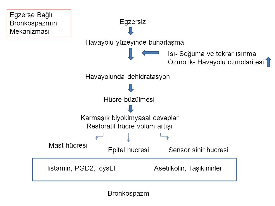 Karmaşık biyokimyasal cevaplar Restoratif hücre volüm artışı