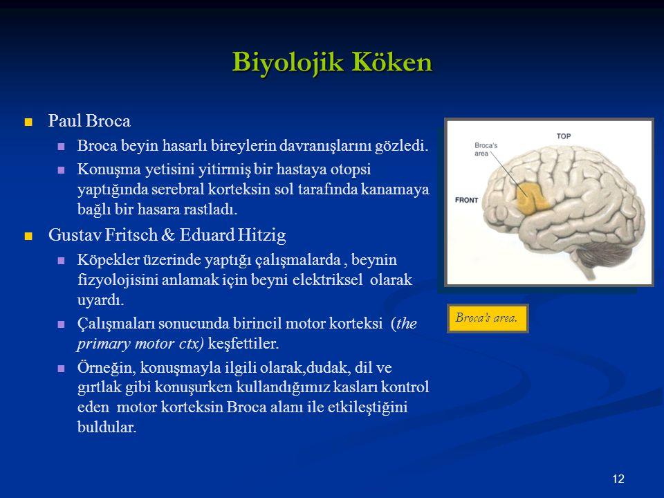 Biyolojik Köken Paul Broca Gustav Fritsch & Eduard Hitzig