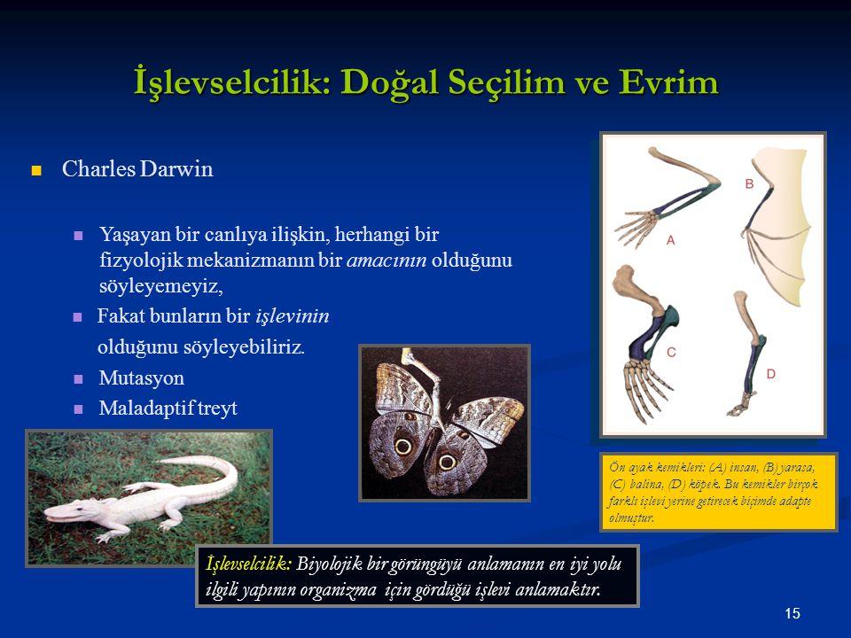 İşlevselcilik: Doğal Seçilim ve Evrim
