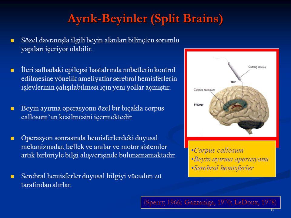 Ayrık-Beyinler (Split Brains)