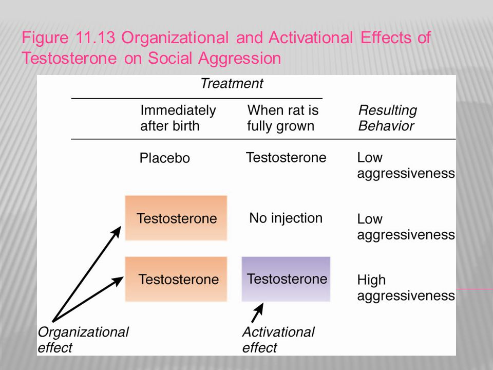 Figure 11.13 Organizational and Activational Effects of Testosterone on Social Aggression