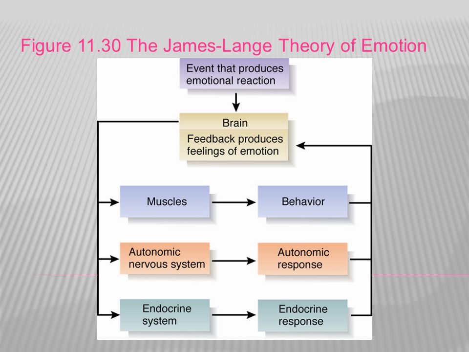 Figure 11.30 The James-Lange Theory of Emotion