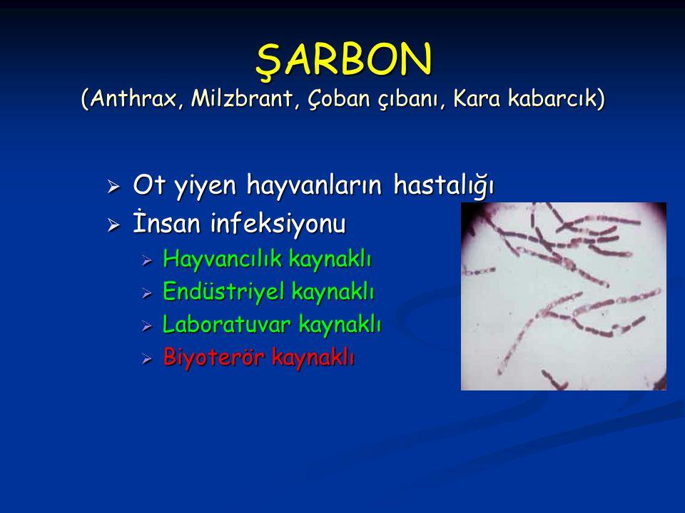 ŞARBON (Anthrax, Milzbrant, Çoban çıbanı, Kara kabarcık)