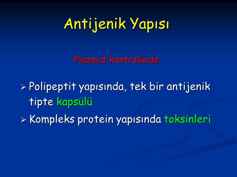 Antijenik Yapısı Polipeptit yapısında, tek bir antijenik tipte kapsülü