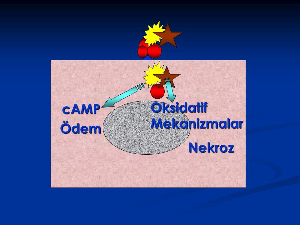 Oksidatif cAMP Mekanizmalar Ödem Nekroz