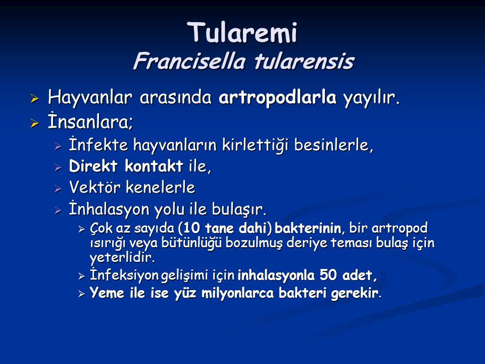 Tularemi Francisella tularensis