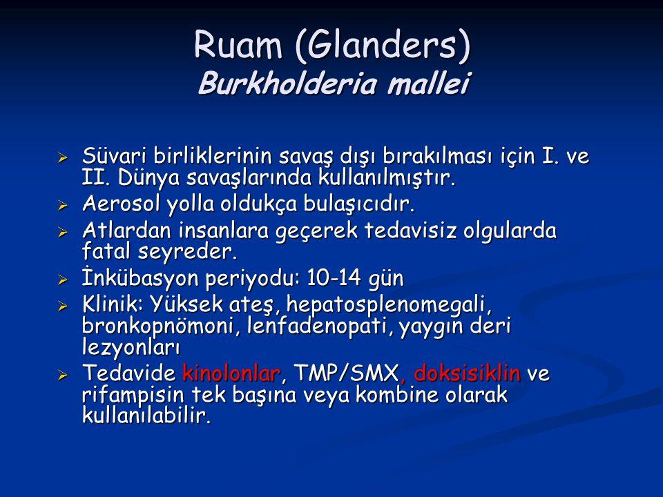 Ruam (Glanders) Burkholderia mallei