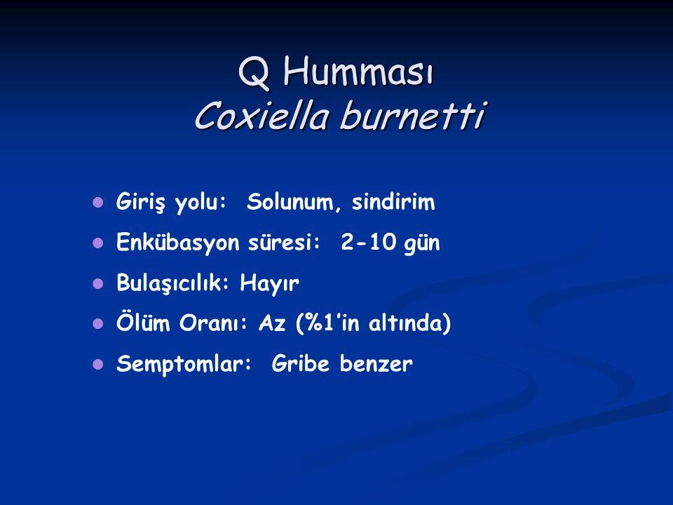 Q Humması Coxiella burnetti Giriş yolu: Solunum, sindirim