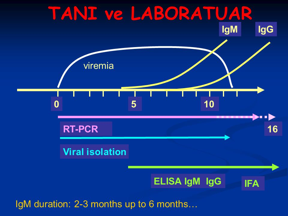 TANI ve LABORATUAR IgM IgG viremia 5 10 RT-PCR 16 Viral isolation