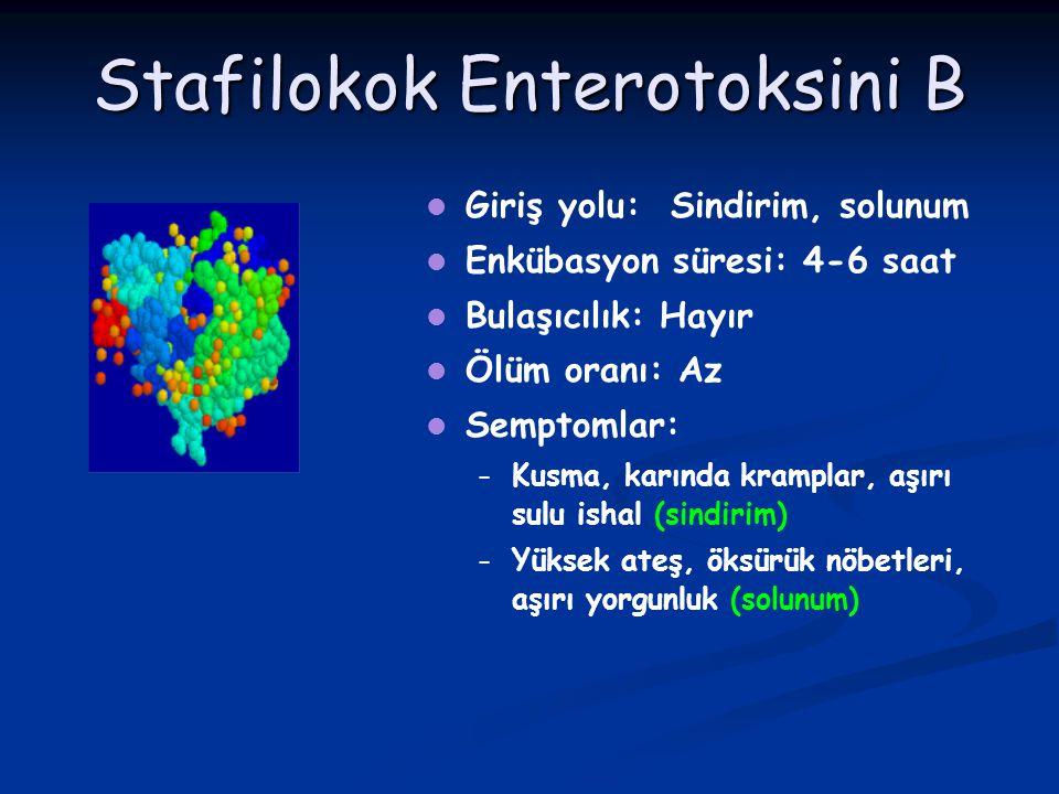 Stafilokok Enterotoksini B