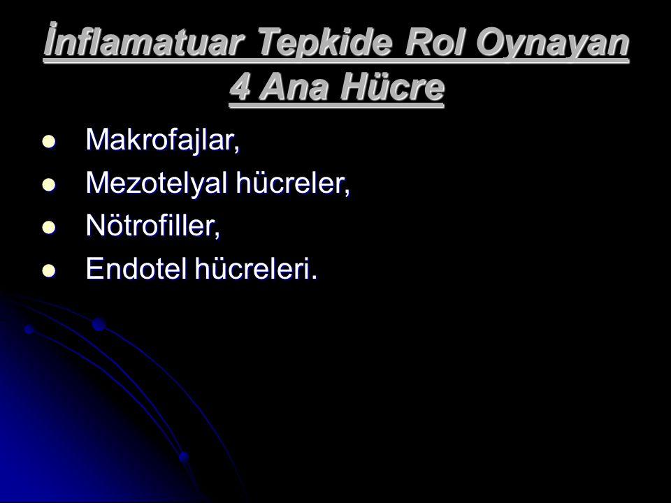 İnflamatuar Tepkide Rol Oynayan 4 Ana Hücre