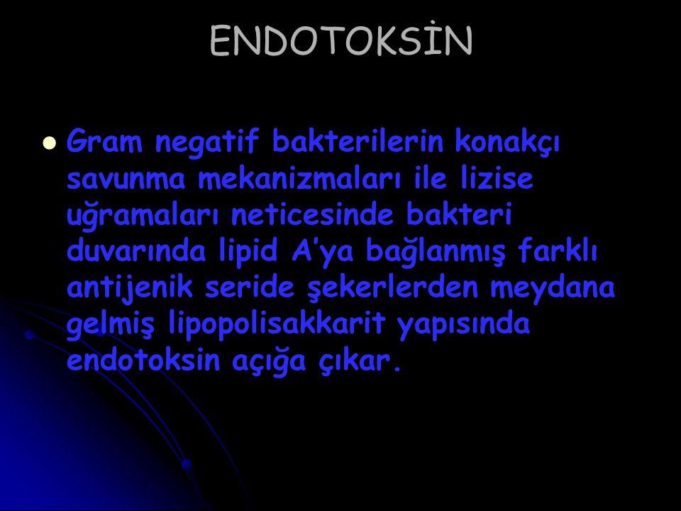ENDOTOKSİN