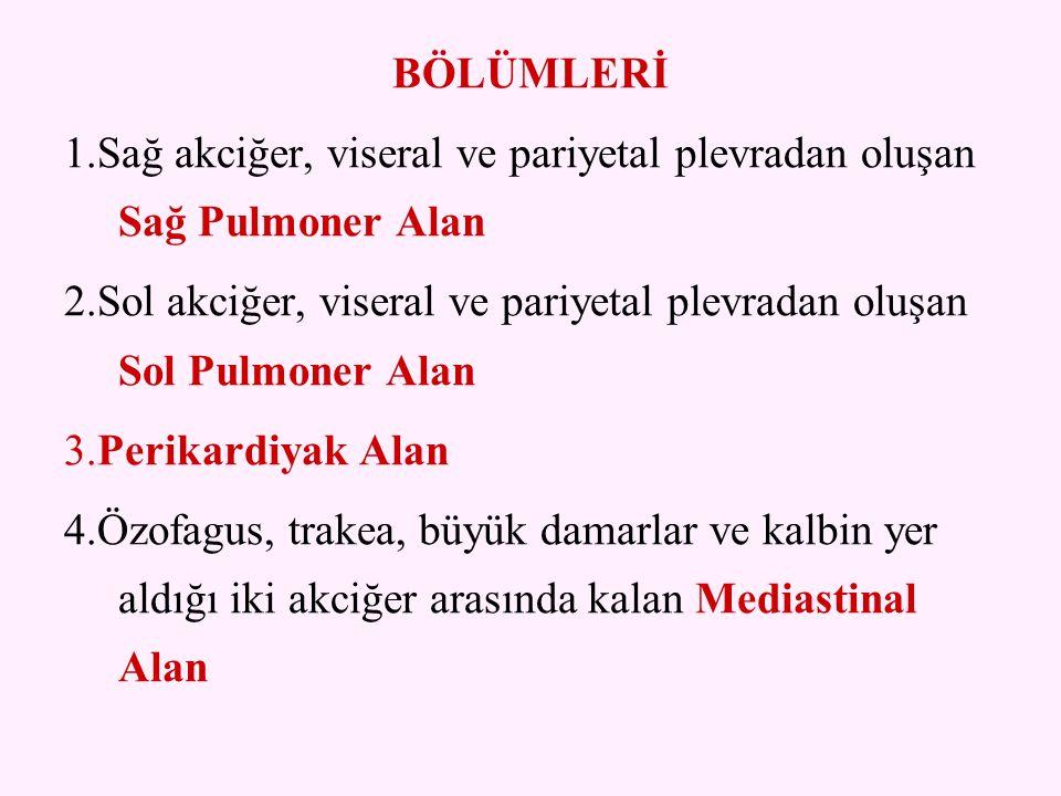 BÖLÜMLERİ 1.Sağ akciğer, viseral ve pariyetal plevradan oluşan Sağ Pulmoner Alan.
