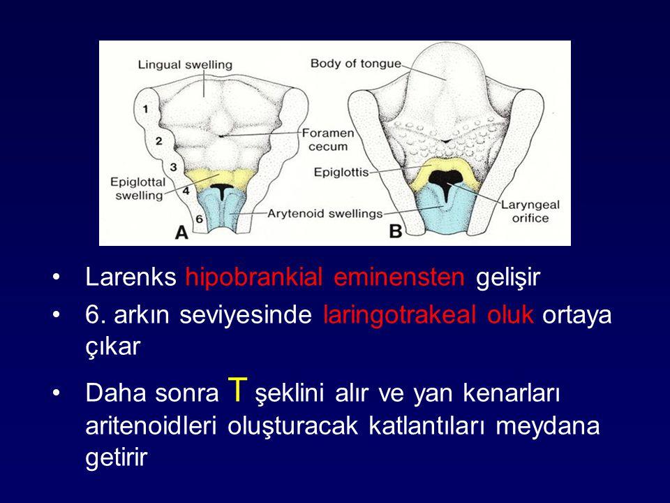 Larenks hipobrankial eminensten gelişir