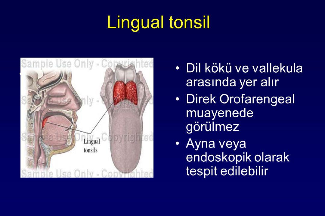 Lingual tonsil Dil kökü ve vallekula arasında yer alır