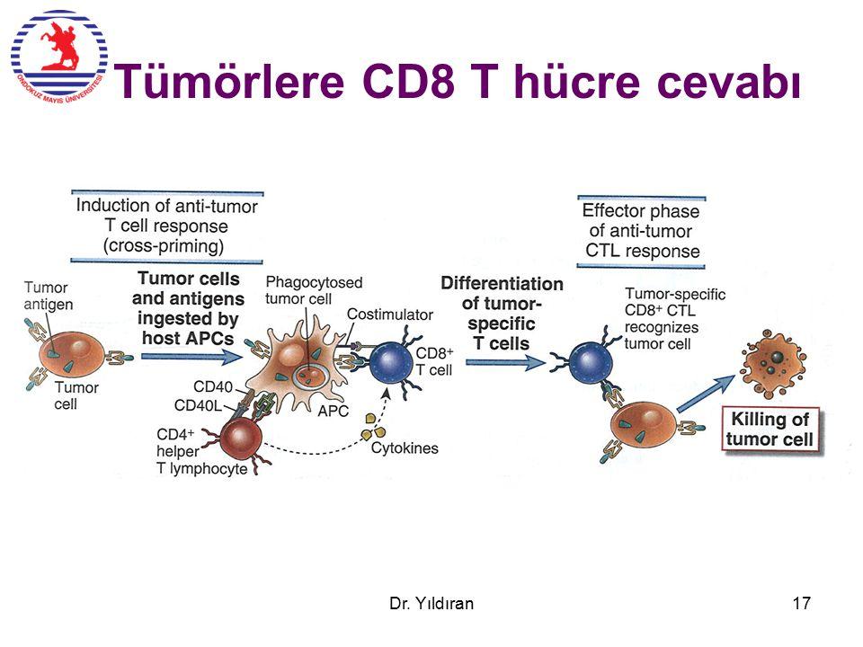 Tümörlere CD8 T hücre cevabı