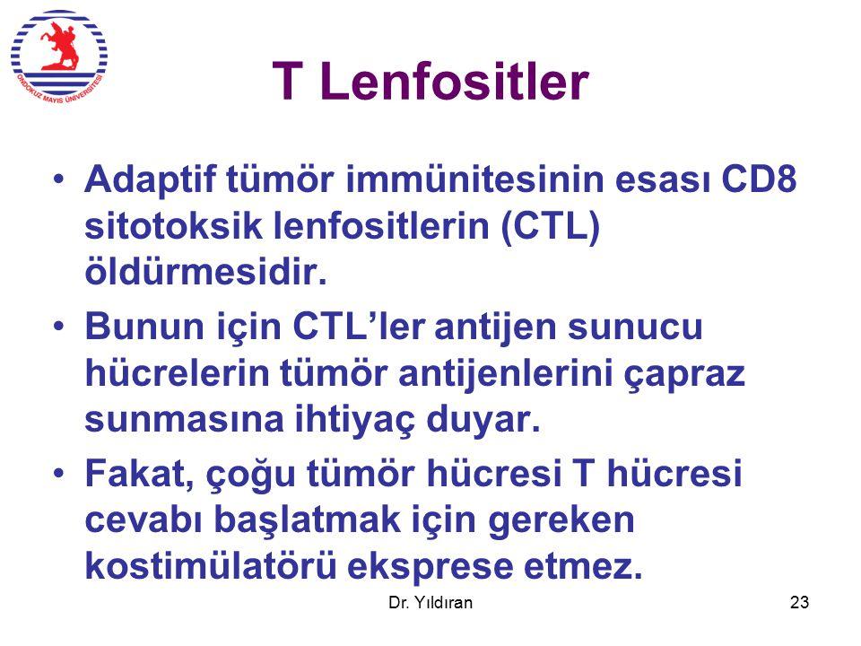 T Lenfositler Adaptif tümör immünitesinin esası CD8 sitotoksik lenfositlerin (CTL) öldürmesidir.