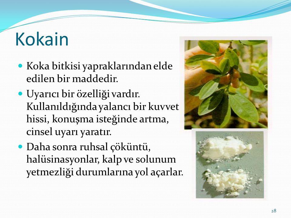 Kokain Koka bitkisi yapraklarından elde edilen bir maddedir.
