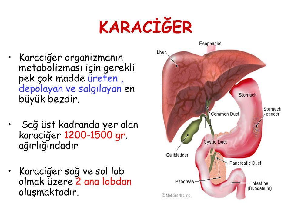 KARACİĞER Karaciğer organizmanın metabolizması için gerekli pek çok madde üreten , depolayan ve salgılayan en büyük bezdir.