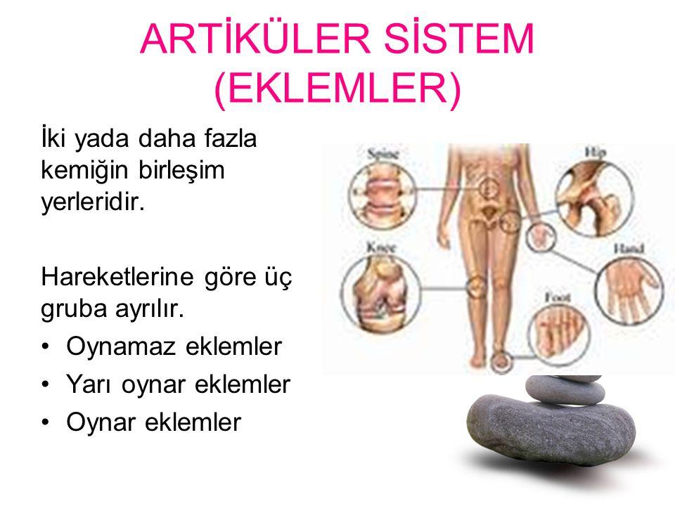 ARTİKÜLER SİSTEM (EKLEMLER)