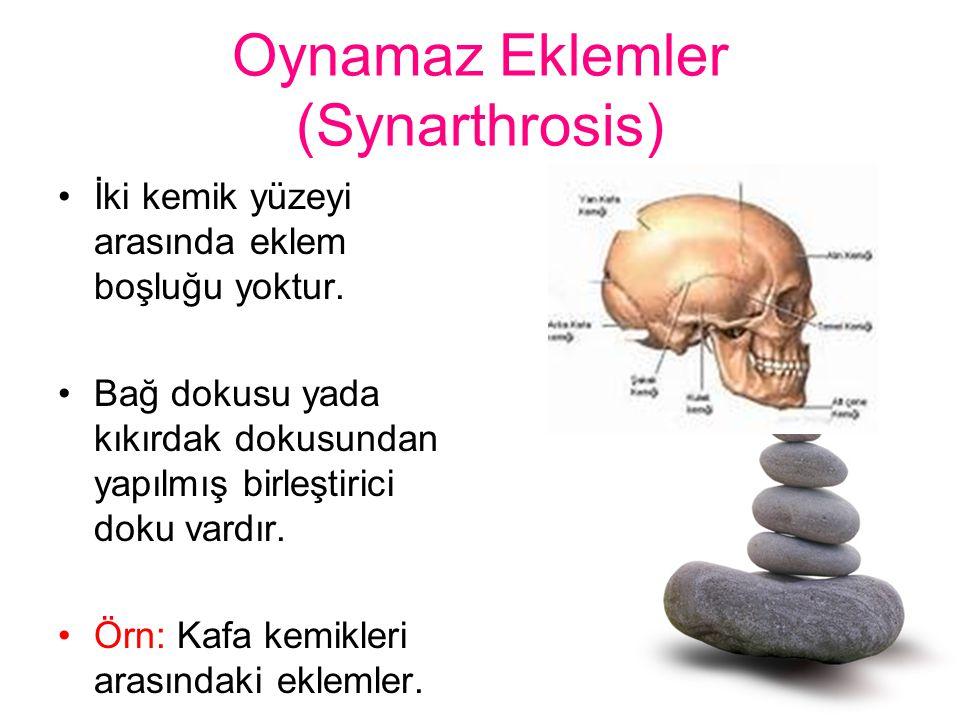 Oynamaz Eklemler (Synarthrosis)