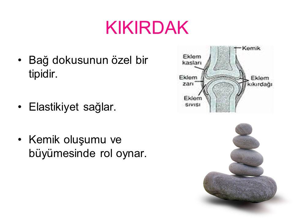KIKIRDAK Bağ dokusunun özel bir tipidir. Elastikiyet sağlar.