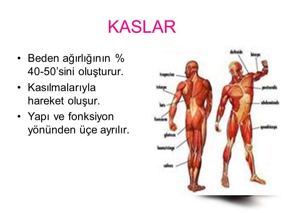 KASLAR Beden ağırlığının % 40-50'sini oluşturur.