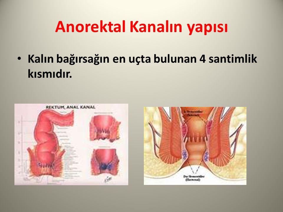 Anorektal Kanalın yapısı