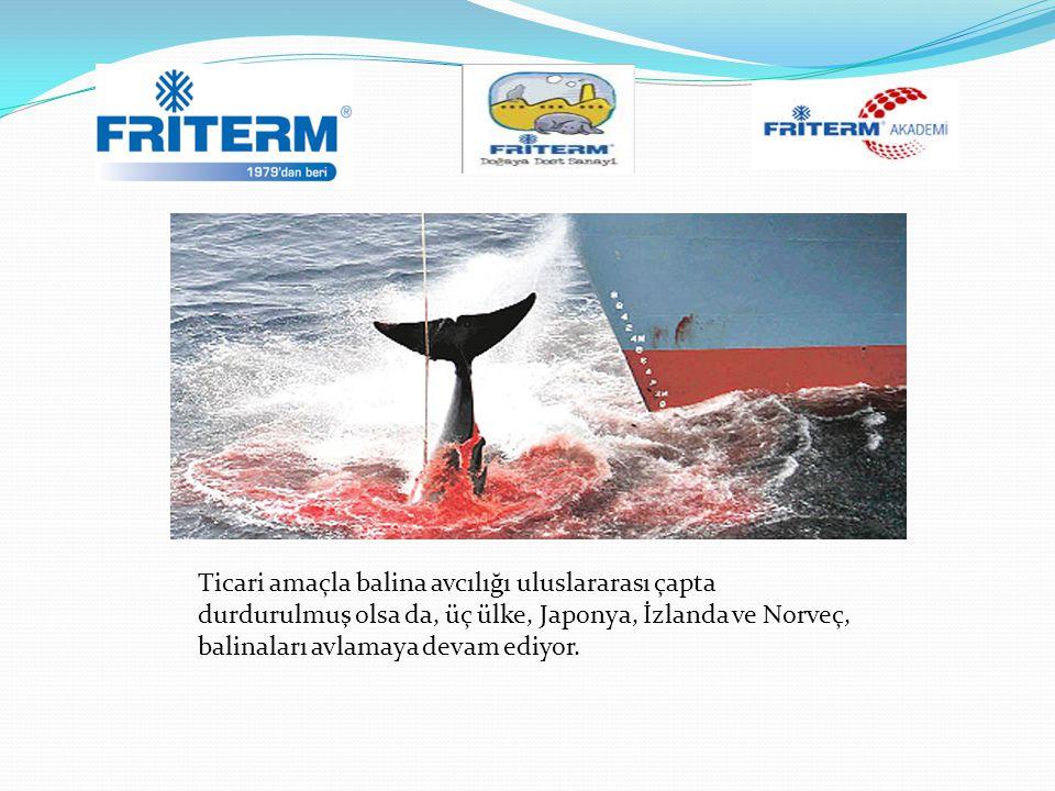 Ticari amaçla balina avcılığı uluslararası çapta durdurulmuş olsa da, üç ülke, Japonya, İzlanda ve Norveç, balinaları avlamaya devam ediyor.