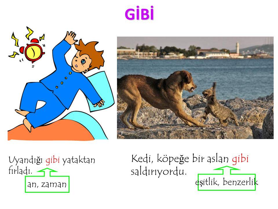 GİBİ Kedi, köpeğe bir aslan gibi saldırıyordu.