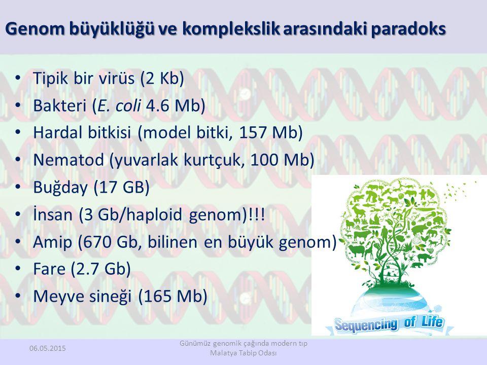 Genom büyüklüğü ve komplekslik arasındaki paradoks