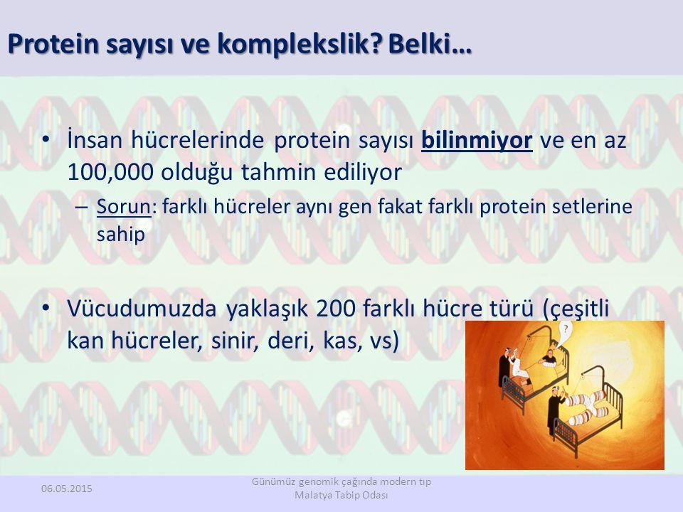 Protein sayısı ve komplekslik Belki…