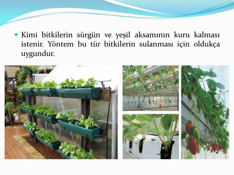 Kimi bitkilerin sürgün ve yeşil aksamının kuru kalması istenir