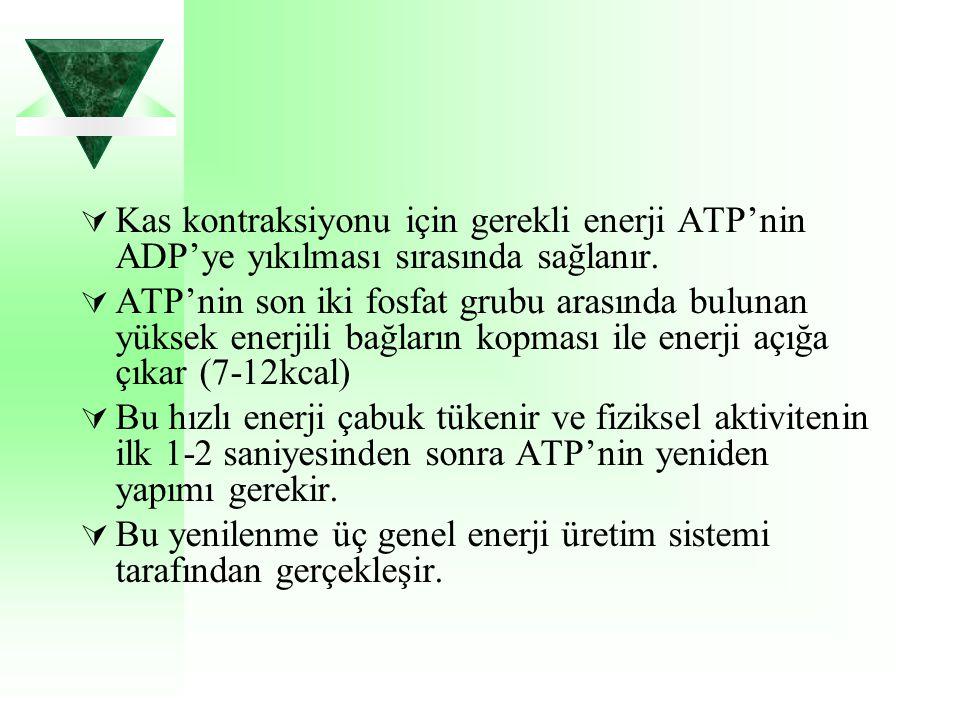 Kas kontraksiyonu için gerekli enerji ATP'nin ADP'ye yıkılması sırasında sağlanır.