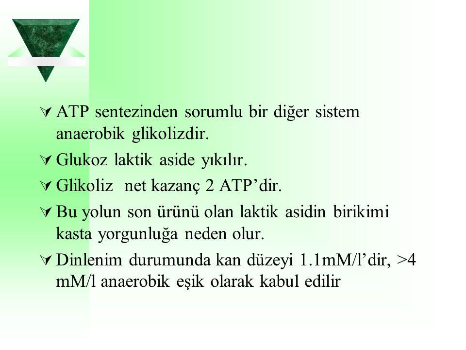 ATP sentezinden sorumlu bir diğer sistem anaerobik glikolizdir.